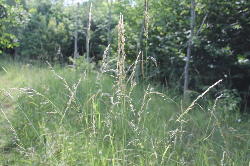 Beautiful Light in Grass